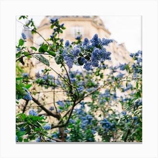 Paris Garden Iv Canvas Print