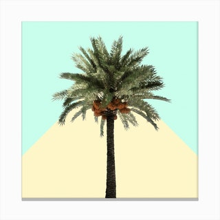 Palm Tree on Cyan and Lemon Wall Canvas Print