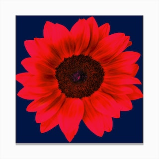 Red Sunflower Square Canvas Print