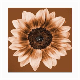 Rustic Sunflower Square Canvas Print