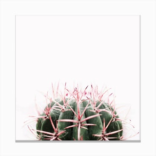 Cactus Red Canvas Print