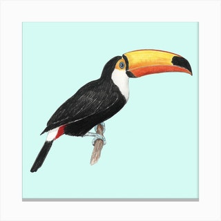 Toco Toucan Bird Square Canvas Print