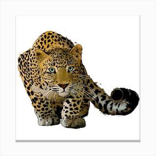 Leopard Stalking White Square Canvas Print