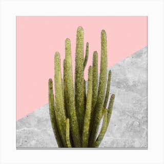 Cactus on Pink and Grey Marble Wall Canvas Print