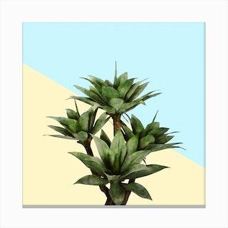 Agave Plant on Lemon and Teal Wall Canvas Print