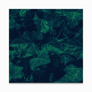 Ivy In The Park Canvas Print