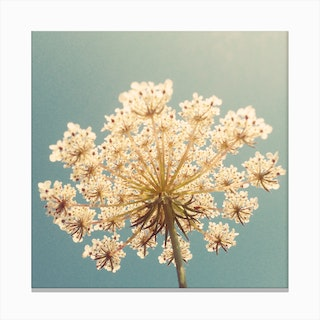 Flower Sky Canvas Print