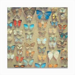 The Butterfly Collection Canvas Print