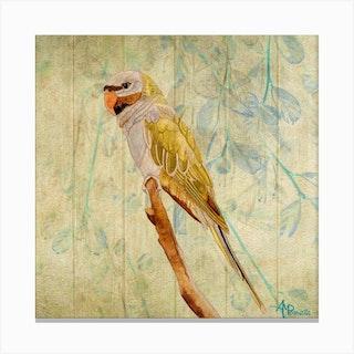 Derbyan Parakeet Square Canvas Print