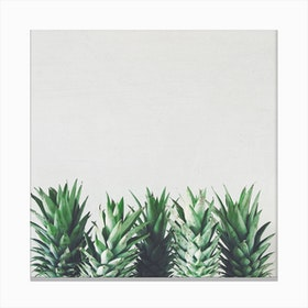 Pineapple Leaves Canvas Print