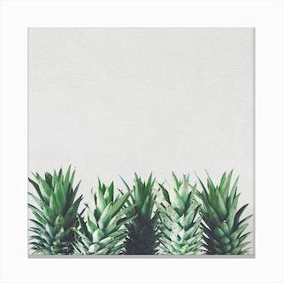 Pineapple Leaves Canvas Print