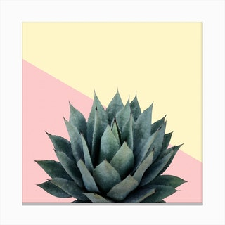 Agave Plant on Lemon and Pink Wall Canvas Print