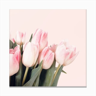 Pink Tulips2 Canvas Print