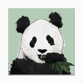 Panda And Bamboo Square Canvas Print