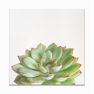 Pink And Green Succulent Canvas Print