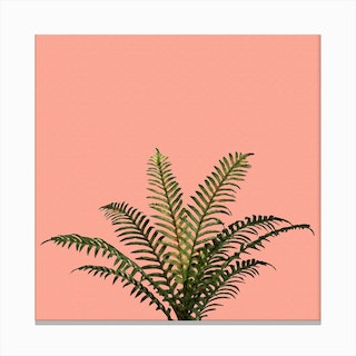 Palm Plant on Pastel Coral Wall Canvas Print