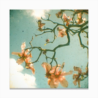 Sun And Flowers Canvas Print