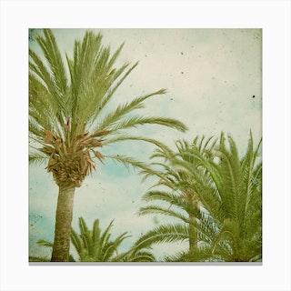 Palm Trees  I Canvas Print