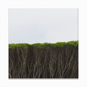 Serious Hedge Canvas Print