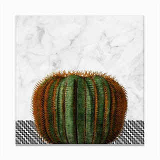 Cactus Ball on White Marble and Zigzag Wall Canvas Print