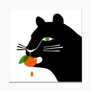 Big Cat Eating An Orange Square Canvas Print