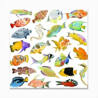Tropical Fish Square Canvas Print