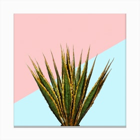 Agave Plant on Pink and Teal Wall Canvas Print