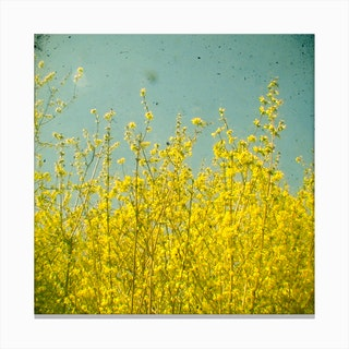 Yellow Nature Canvas Print