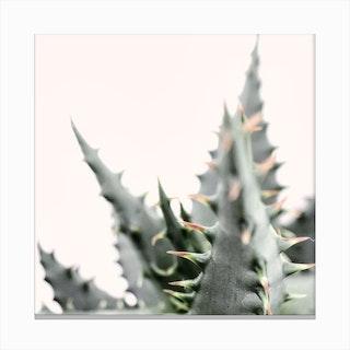Succulent Plant 1 Canvas Print