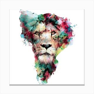 Lion 2 Square Canvas Print