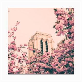 Notre Dame Cherry Blossoms Canvas Print