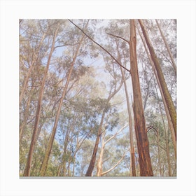 Eucalyptus Forest Canvas Print