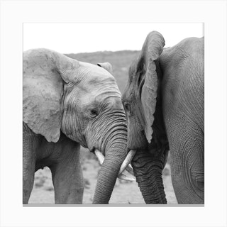 Elephant Talk Canvas Print