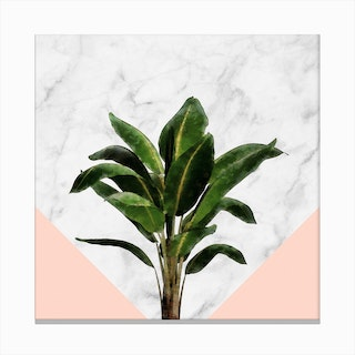 Banana Plant on Pink and Marble Wall Canvas Print