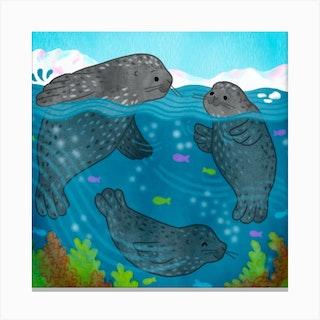 Seals Square Canvas Print