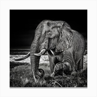 Sunset At The Waterhole Canvas Print