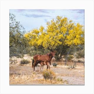 Wild Horse 1 Square Canvas Print