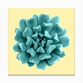 Cyan Succulent Plant on Yellow Canvas Print