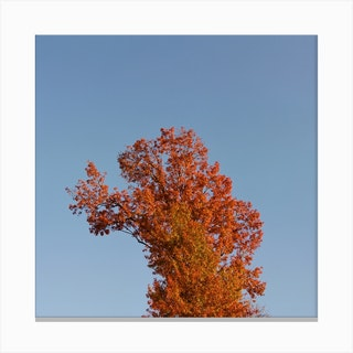 Autumnal Tree Square Canvas Print