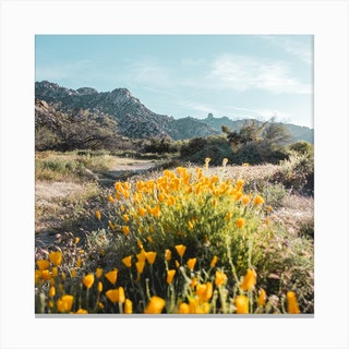Yellow Flowers Square Canvas Print