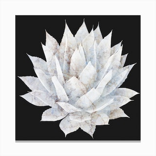Agave White Marble Canvas Print