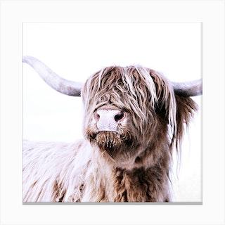 Highland Cattle Frida White Square Canvas Print
