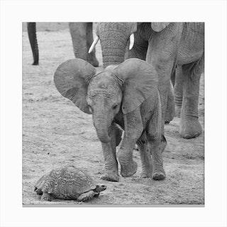 Elephant Baby 9641 Canvas Print