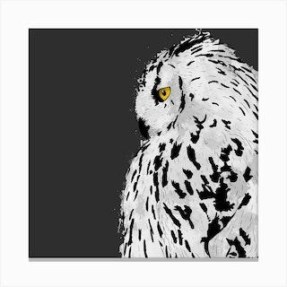 Snowy Owl Square Canvas Print