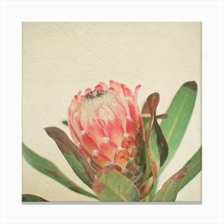 Pink Ice Canvas Print