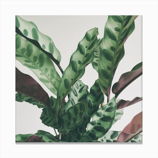 Pattern Leaves Canvas Print