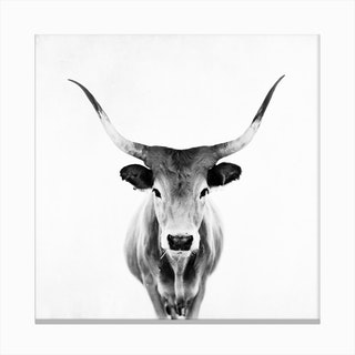 Honey in Black and White Canvas Print