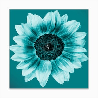 Teal Sunflower Square Canvas Print