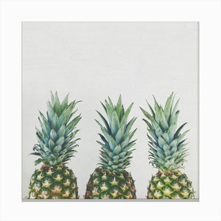 Three Pineapples Canvas Print