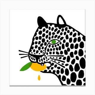 Big Cat Eating A Lemon Square Canvas Print